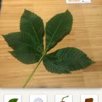 Welchen Teil der Pflanze haben Sie fotografiert?