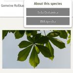 Wikipedia oder Tela Botanica liefert alle wichtigen Informationen