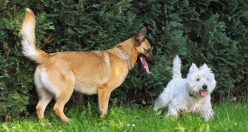 Hunde und Parkett / ©Verena N./pixelio.de