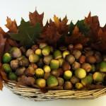 Einfache Herbstdeko selber gestalten