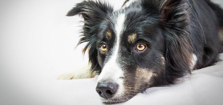 Hund und Vinylboden