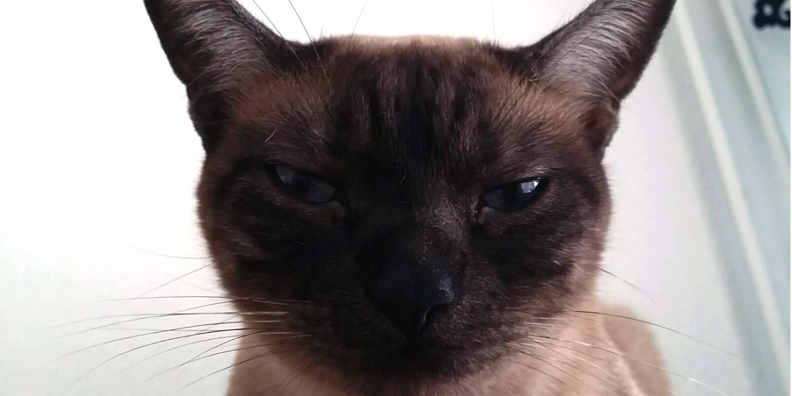 Katze hasst deinen Boden